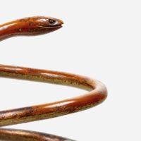 Der Schlangenschirmständer aus dem Hause Thonet